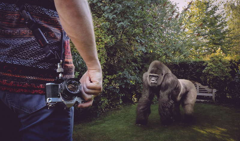 Dude, there is a gorilla in my garden