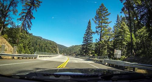 Coastal Redwoods and Fog-050