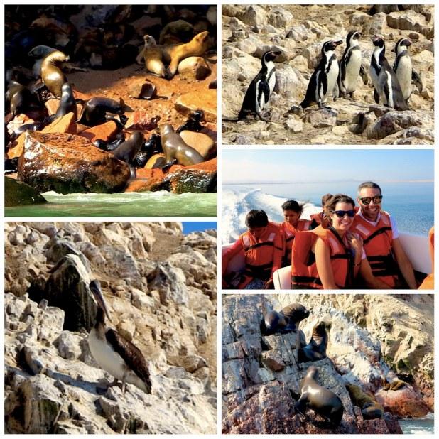 Lobos marinos en Paracas