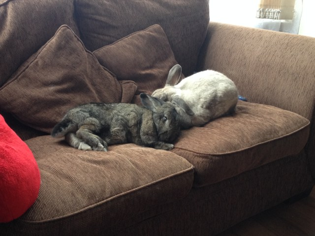 This is our sofa humans!