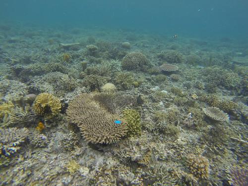 Kanawa Snorkelling