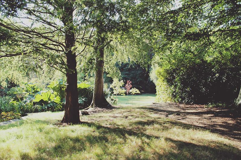Chewton Glen woods