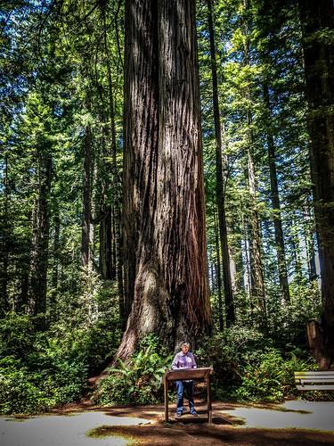 Redwoods and Elk-042