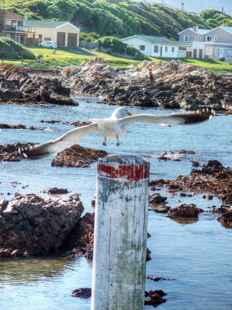 View from the shores of Gansbaai