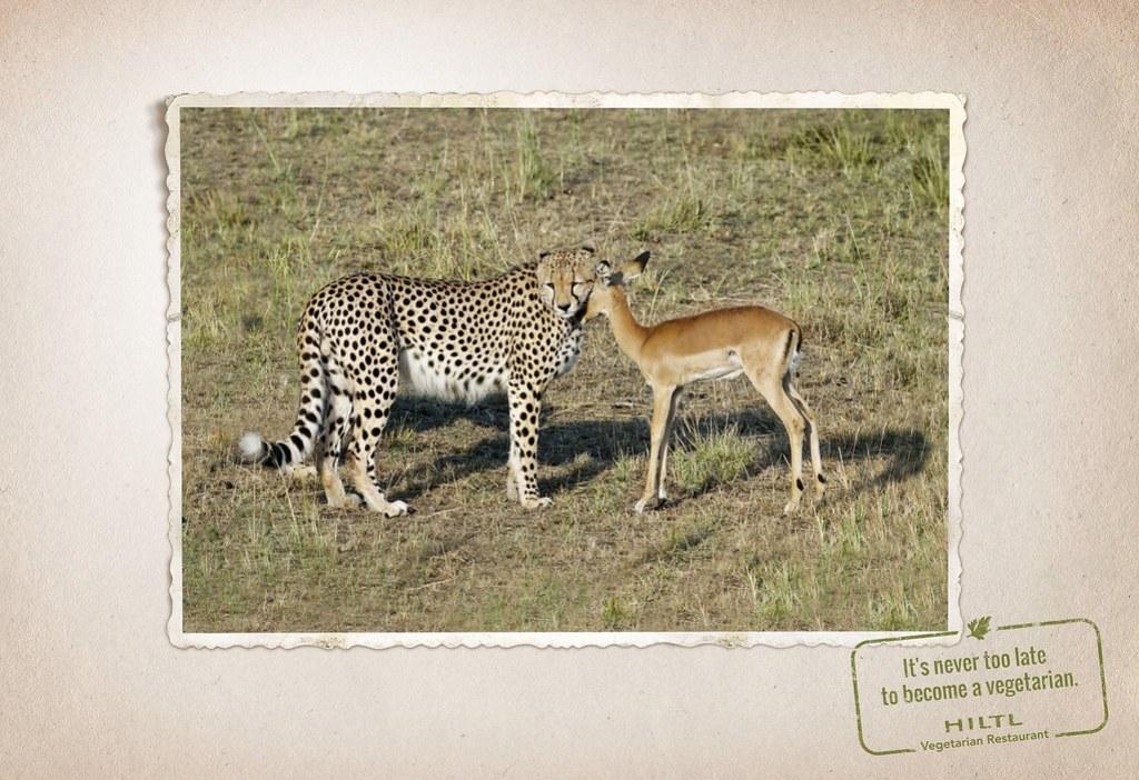 Hiltl Vegetarian Restaurant - Animal friendship 2