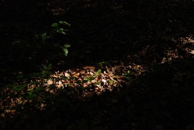 Vapec, Slovakia, leaves