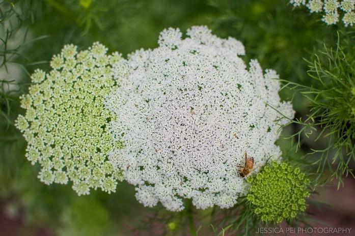 white plant bee