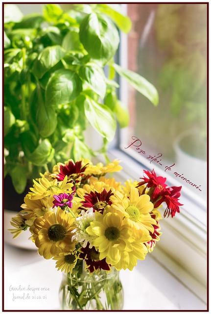 Flori de vara pe pervaz...