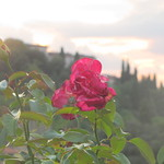 Viajefilos en Florencia 13