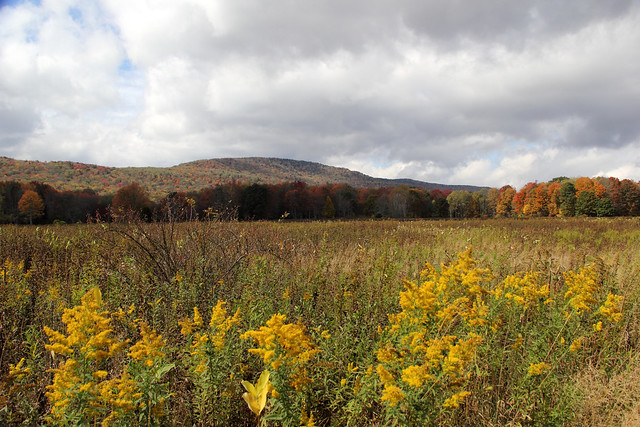 20141004_Cranberry_Wilderness_Area_063