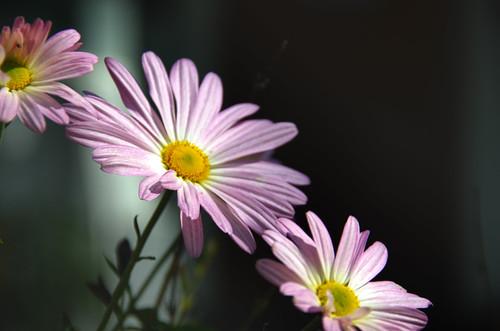Madison Flowers