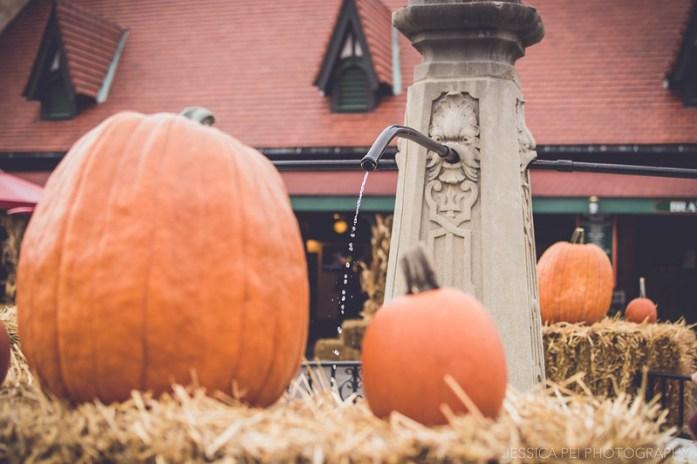 halloween pumpkins grant's farm decorations