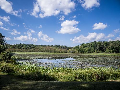 Berry Mill Pond