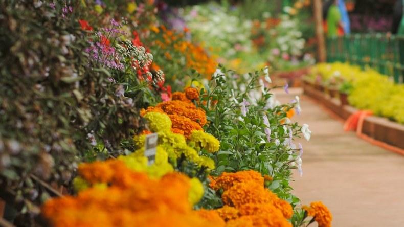 Flower show at Ooty Botanical Garden