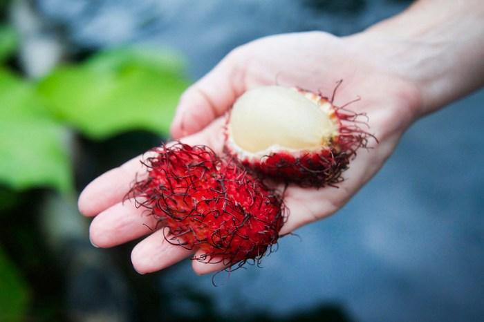 Mamon Chino - Costa Rican Rambutan Fruit
