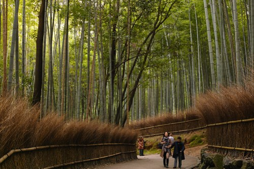京都嵯峨野 竹林の小径