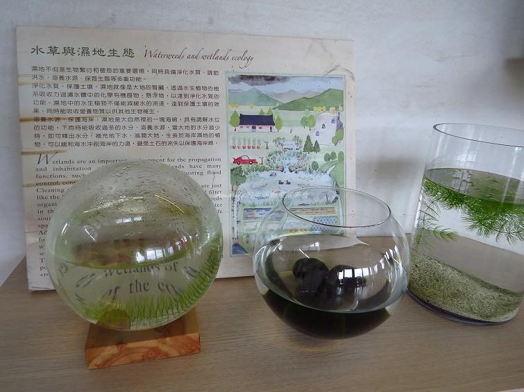 勝洋水草休閒農場 (20)