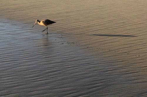 20141013_Huntington_Beach_014