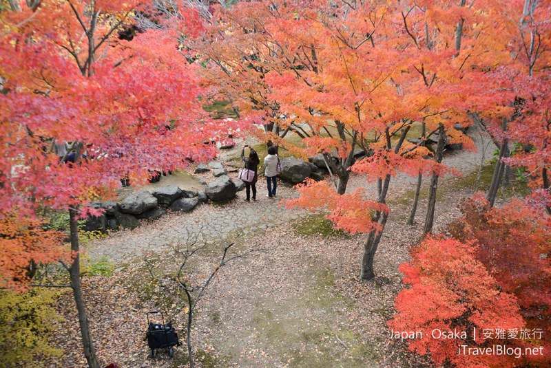 大阪赏枫 万博纪念公园 红叶庭园 24