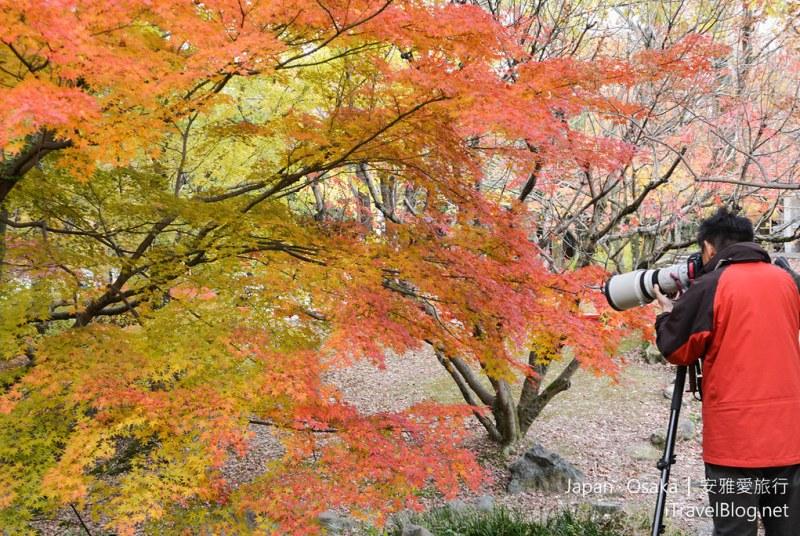 大阪赏枫 万博纪念公园 红叶庭园 11