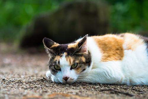 cat_4397