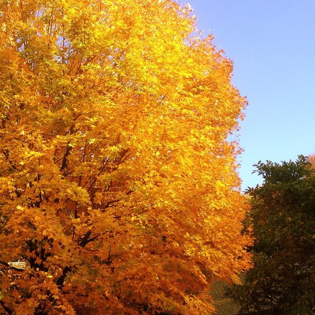 Fall colors... amazing. ????