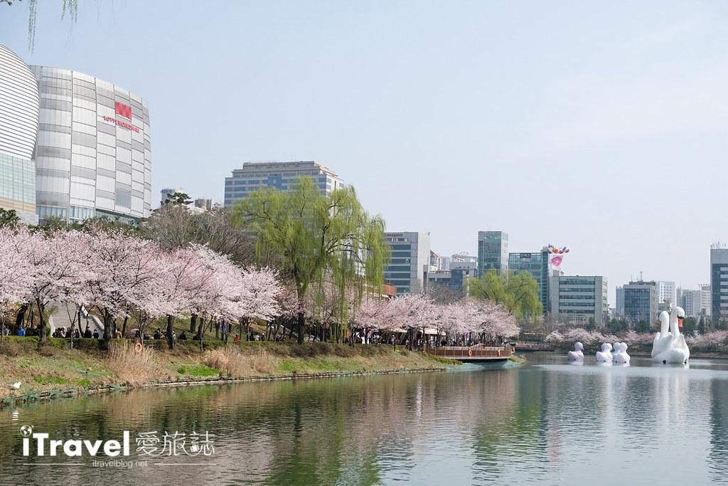 首尔赏樱景点 乐天塔石村湖 (5)