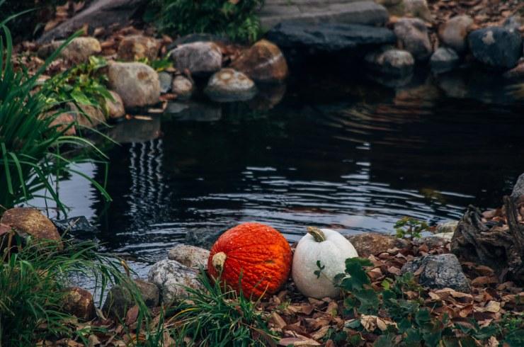 Neighbor pond