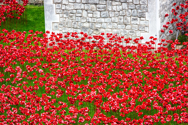 Moat of Poppies - The Tower of London