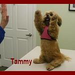 Tammy_highfive