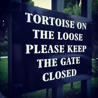 Tortoise on the loose #IABCafrica14
