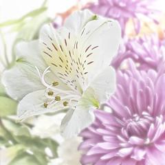 white flower_0361