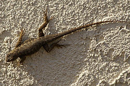 201003 Lizard