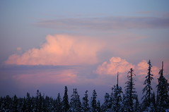 Black Mountain snowshoe, 31 Mar 2010
