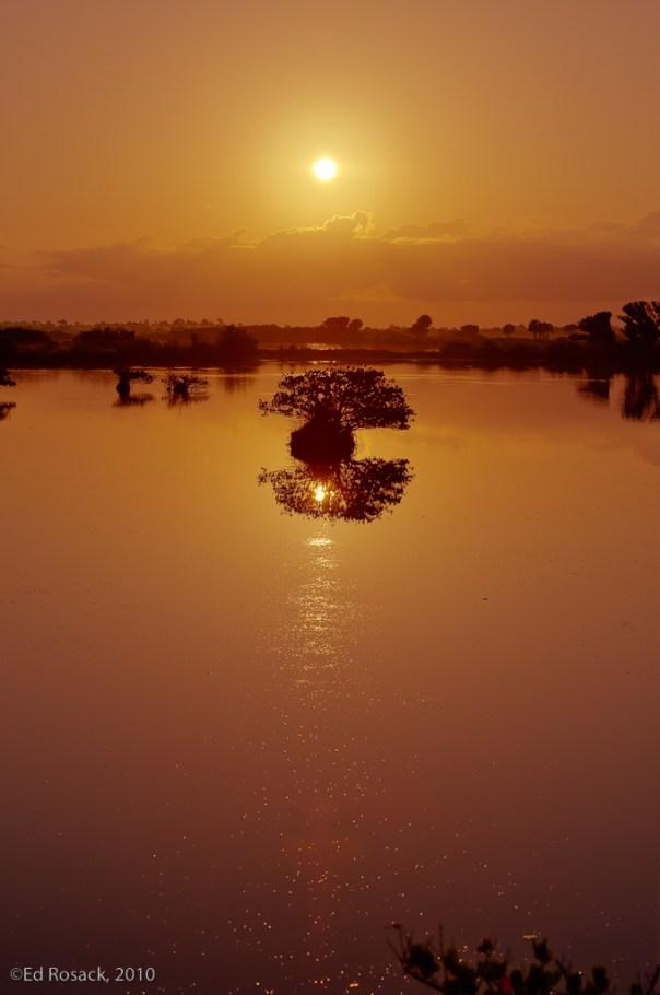 Swampy sunrise