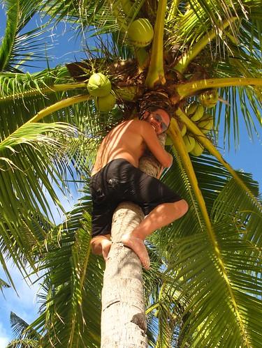 Climbing a coconut palm, Malapascua, Philippines