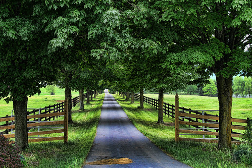 The Tree Lined Lane