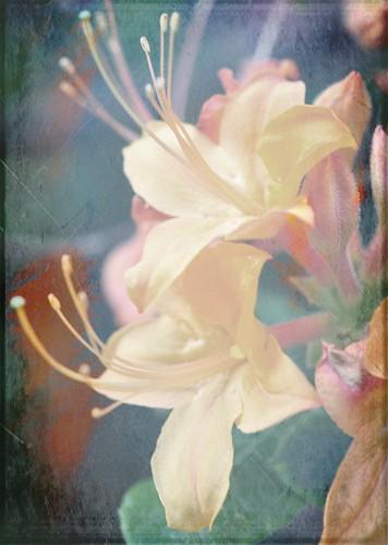 azalea painting