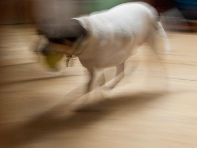 Futurismic Dog