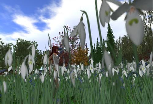 Around virtual gardens