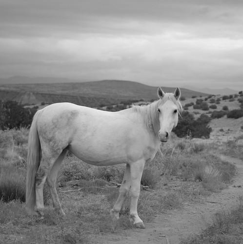 NM Wild Horses nwm (49)