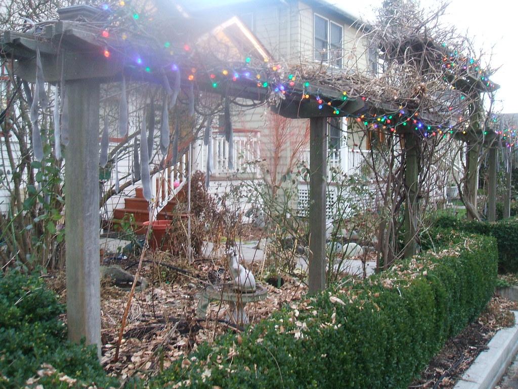 Festive wisteria trellis