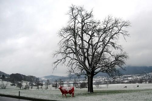 Schweizer Schneekuh