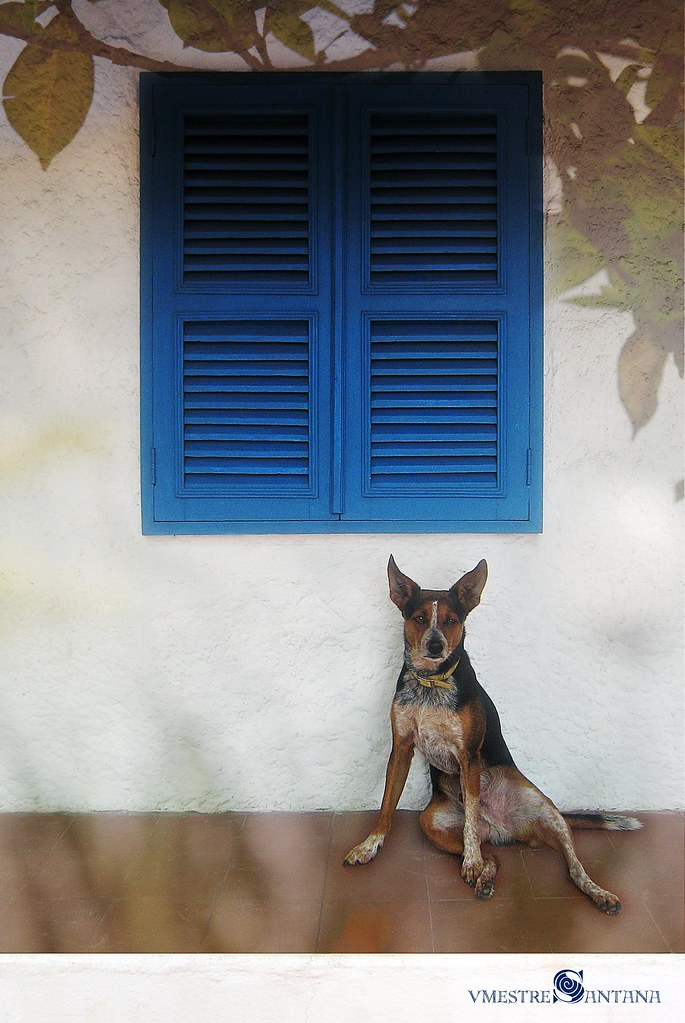 Farrusco, foto: Victor Mestre Santana