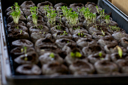 Baby Plants!