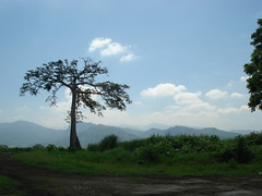 San Vicente Pacaya