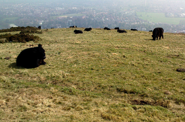Grazing on the Malvern Hills, by Oliver Mallich, under Creative Commons. Click pic for olivern5's photostream..