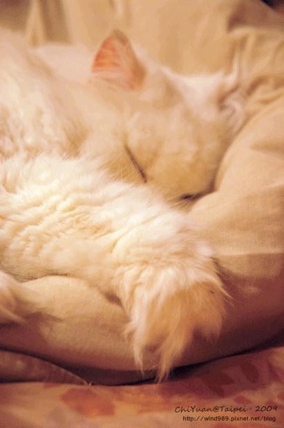 叮叮Cat。暖綿綿的呼喚2.jpg
