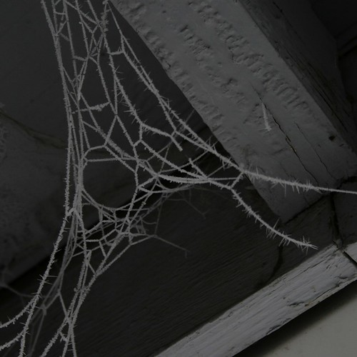Hoarfrost :: on spider web