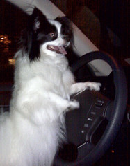 Bella Driving